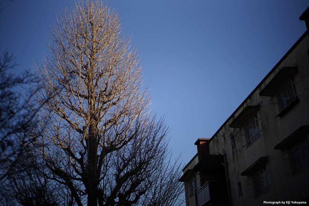 霞ヶ丘アパート。ほどよい周辺減光、パープルっぽい空が感じいい。