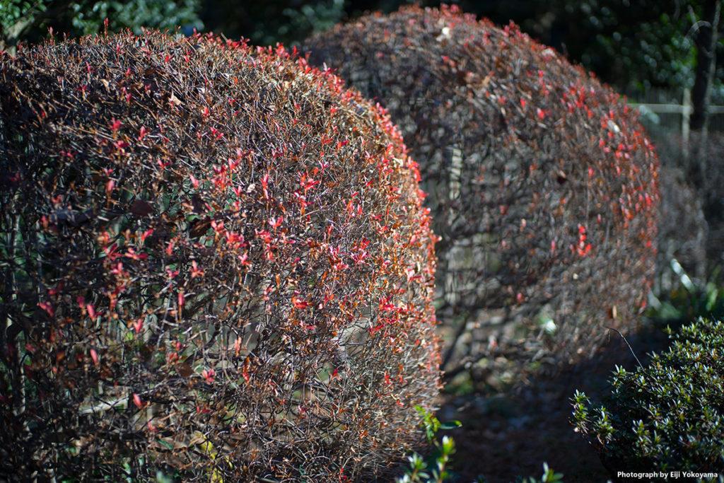 神宮外苑。暖冬です。まだ紅葉が残ってます。