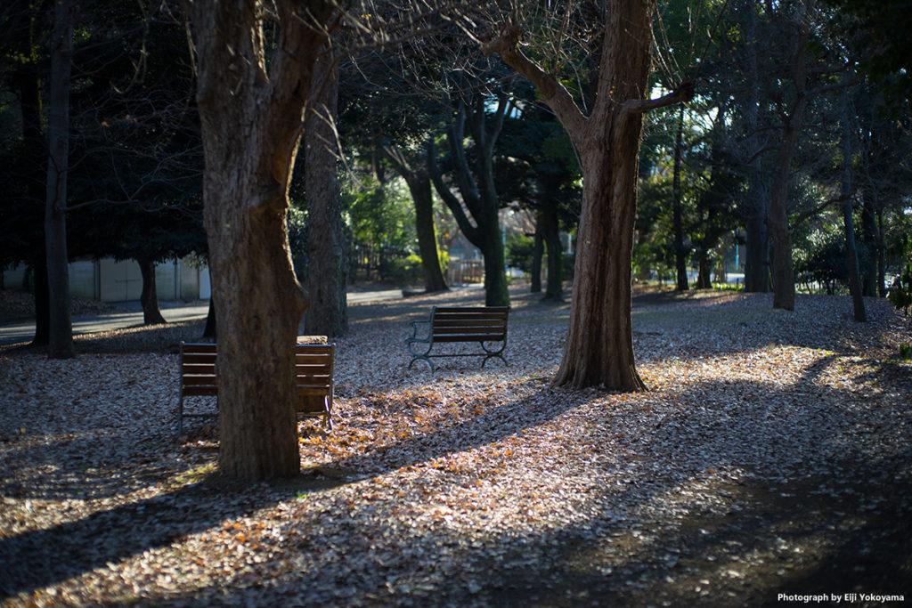銀杏並木横の公園。木やベンチの立体感がイイ!