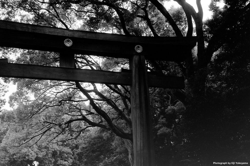 明治神宮、南参道の鳥居。毎度のアングルで1枚。
