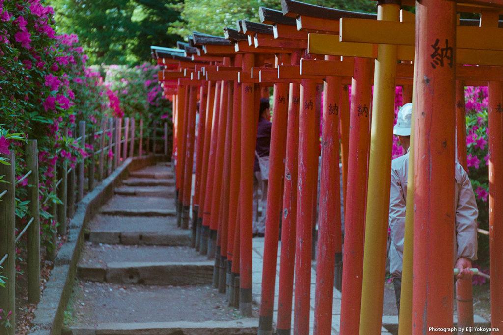 根津神社、お稲荷さんの鳥居。
