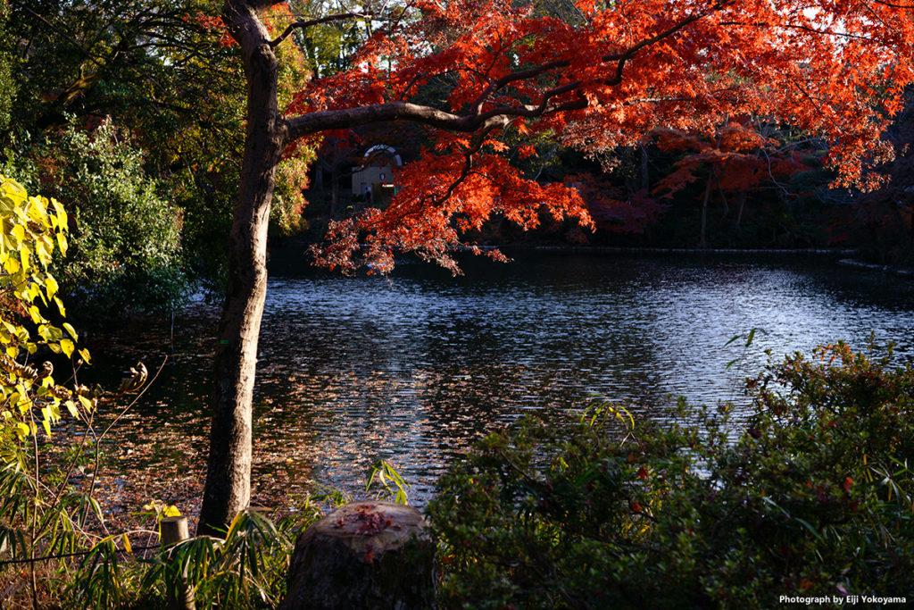 紅葉・井の頭自然文化園 SIGMA fp + 45mm F2.8 DG DN