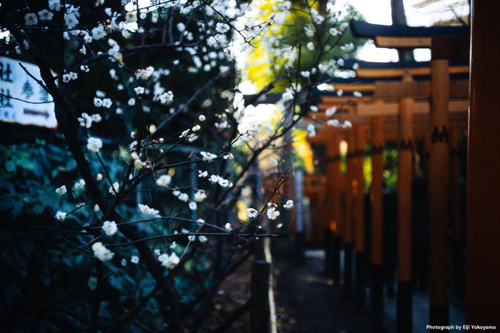 上野公園内、花園稲荷神社。少し梅が咲いていたので。