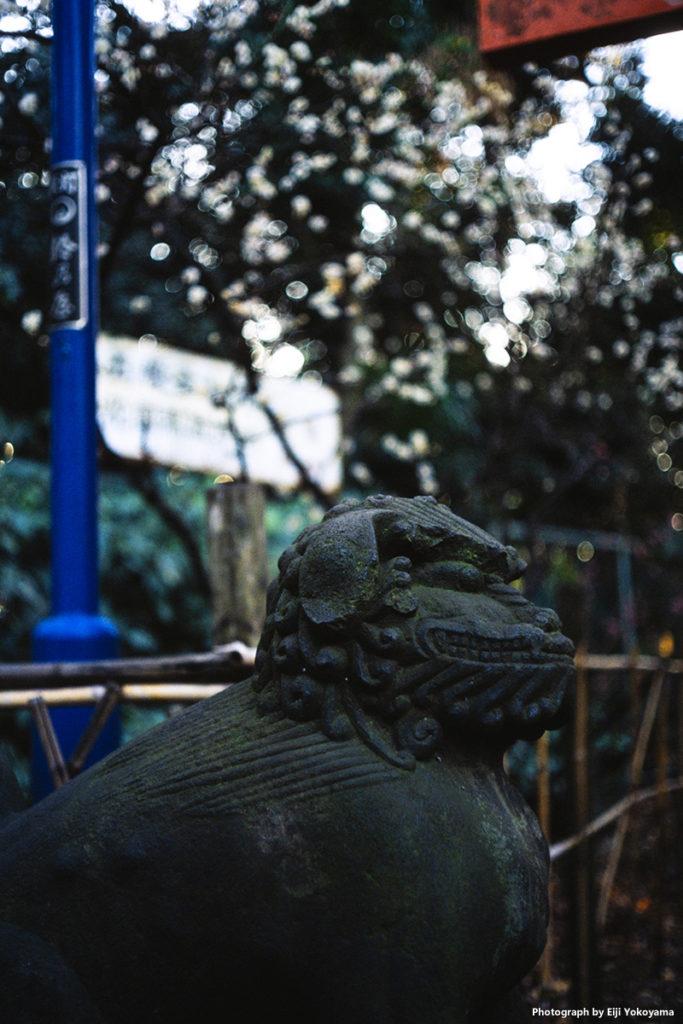 こちらも花園稲荷神社、おもしろ顔の狛犬くん。でも主役は背景?けっこうボケてます。