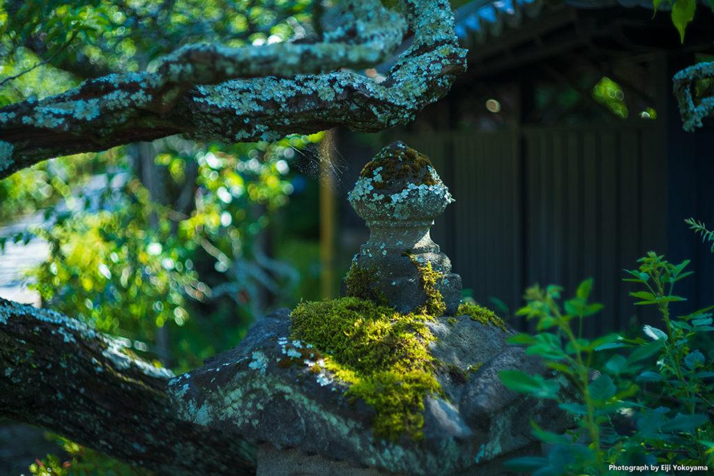 鎌倉、東慶寺。Leica M10 + SUMMICRON 50mm f/2 沈胴。