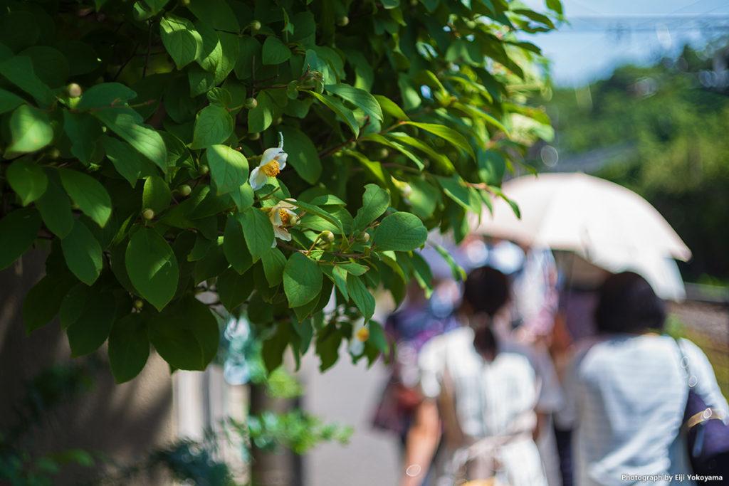 北鎌倉駅近く、線路横の歩道。夏椿が咲いていました。