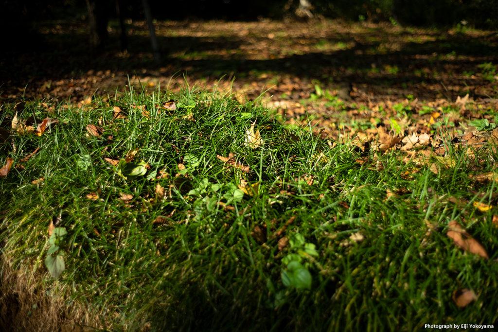 新宿御苑、落ち葉。絞り解放F2のサンプルとして。