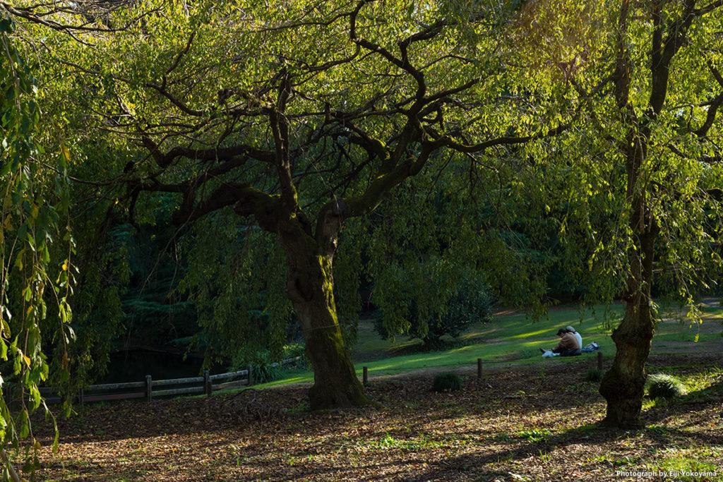 紅葉にはまだまだ。新宿御苑にて。