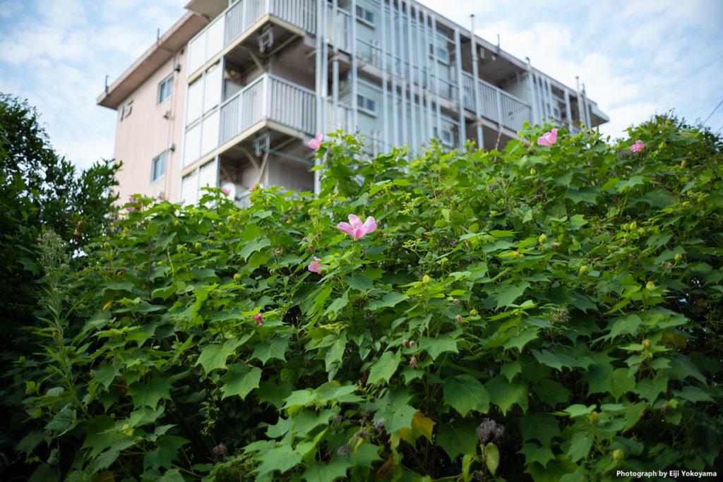 青山北町アパート。まちづくりプロジェクト再開発で間もなく解体。