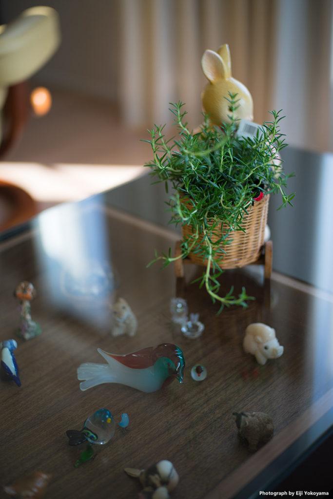 リビングテーブル、ディスプレイの上に、ローズマリーの鉢植。