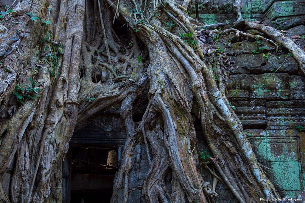 タ・プローム,カンボジア その3