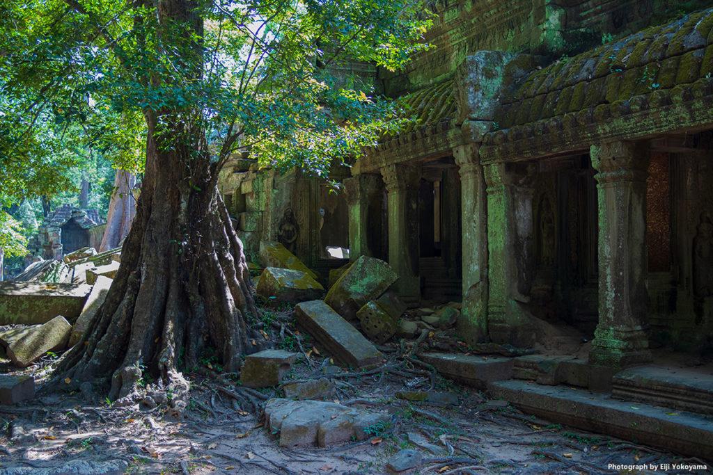 ここは細めの根が遺跡の隙間にいっぱい入り込んでいます。