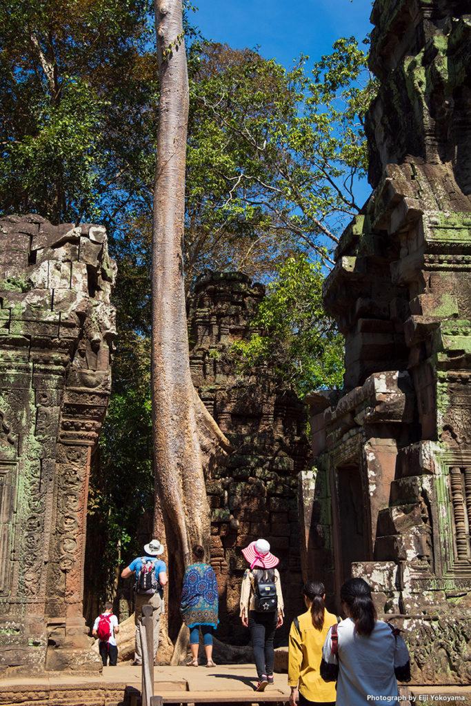 遺跡に巨木。皆、一旦足を止め、上を見上げてから前に進んでいきます。
