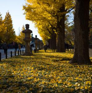 靖国神社・紅葉、黄葉