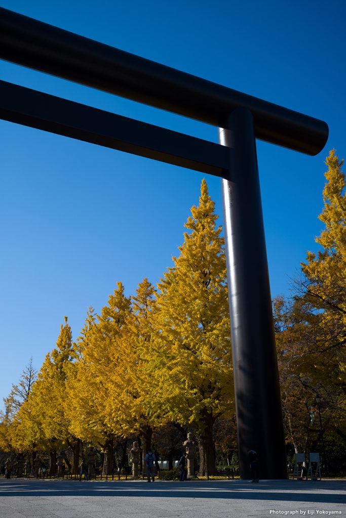 靖国神社・紅葉、黄葉。ライカM10 + ズミクロン35mm7枚玉。