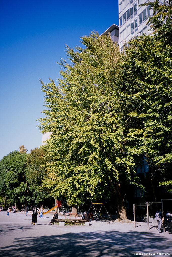 上野公園。CONTAX T3(コンタックスT3)