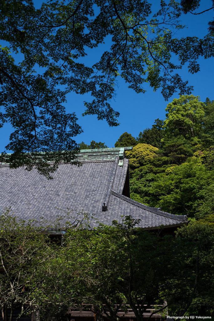 妙本寺の屋根と新緑。