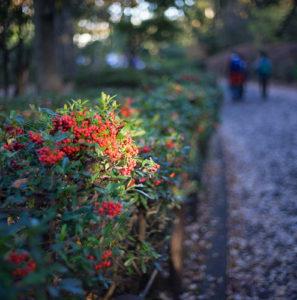 北の丸公園、秋・紅葉 2015