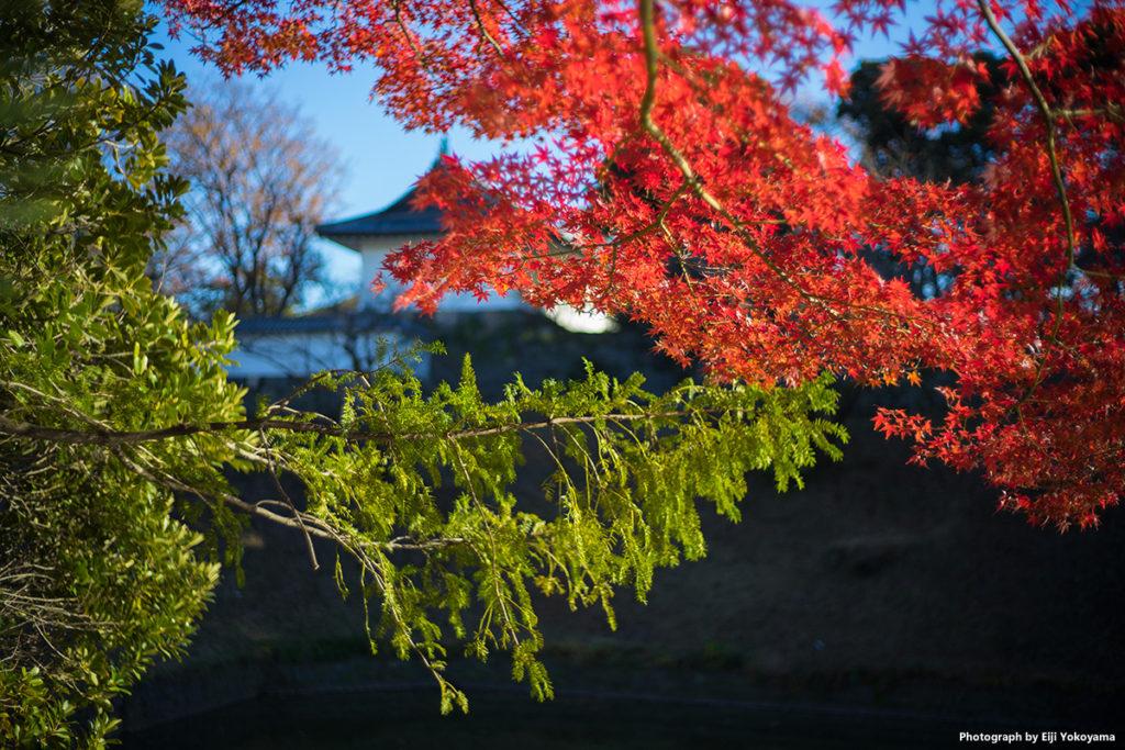 毎度の撮影ポイント。北の丸公園の紅葉。