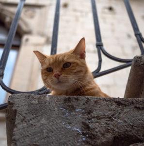 コトル(モンテネグロ)猫の街