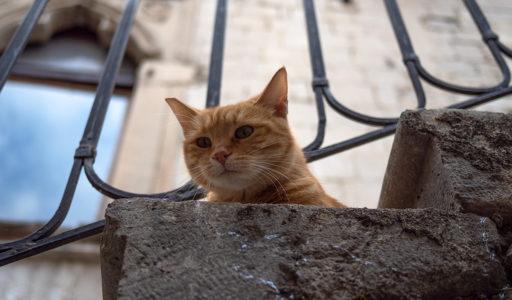 コトル(モンテネグロ)猫の街。 ここの猫たちは、人懐っこくて可愛くて、そしてタレント揃い。