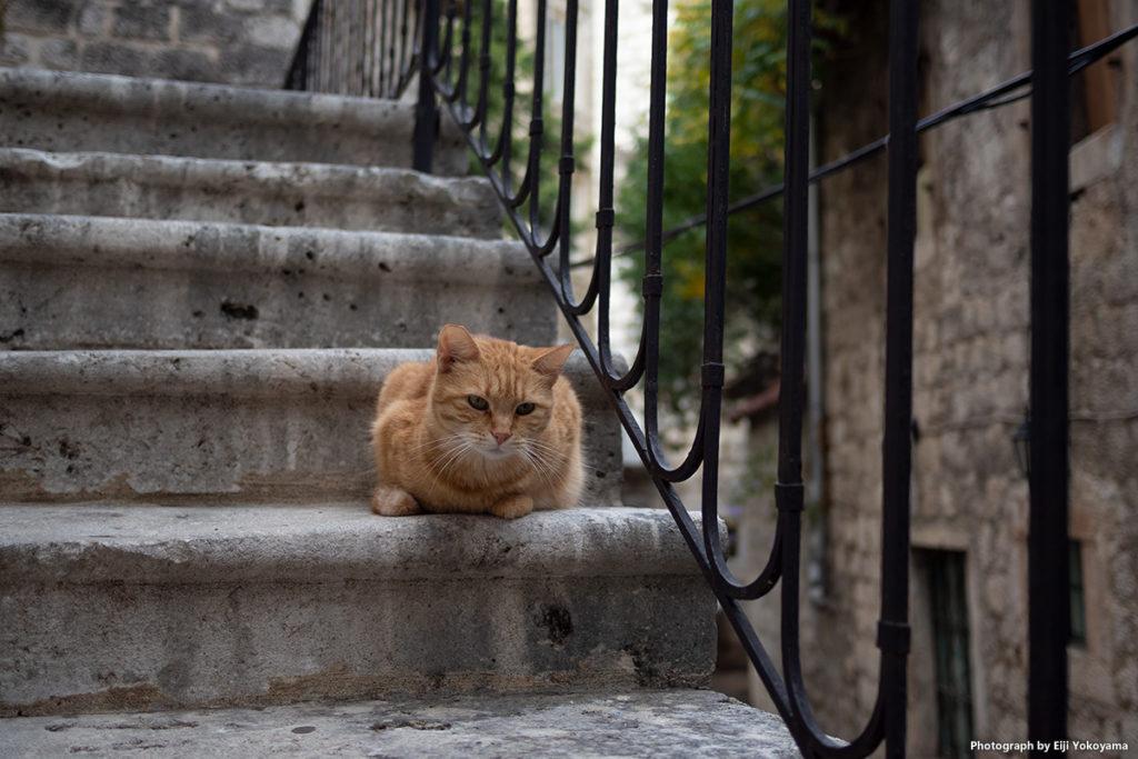 階段の猫。一番上の写真と同じ猫です。