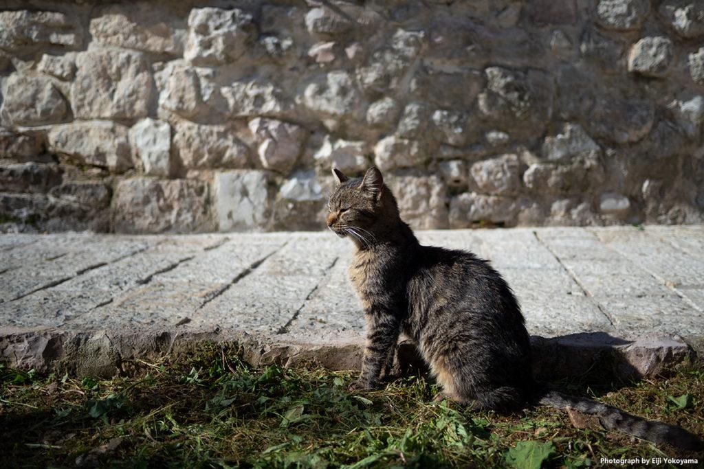 小さくて、ちょこまか走り回ってた猫。時々立ち止まってポーズをとってくれました。