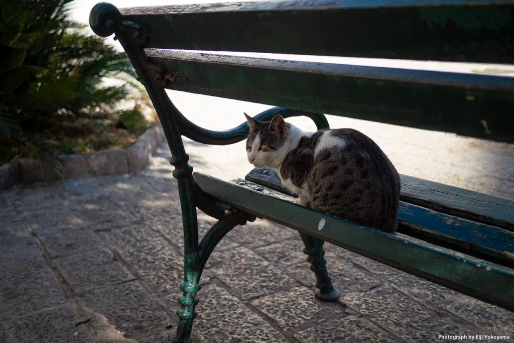 このアングルで撮れよと言わんばかり、ベタな位置でポーズをとってくれてる。よく分かってる猫です。