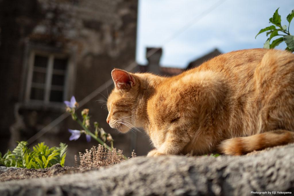 上と同じ猫。全然動かないので、更に近寄って至近距離でパシャリ!