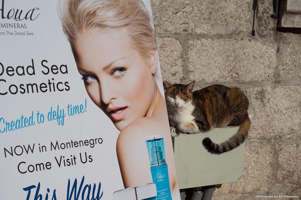 看板のオネエさんに擦り寄ってる猫。きっとオス、幸せそうです。