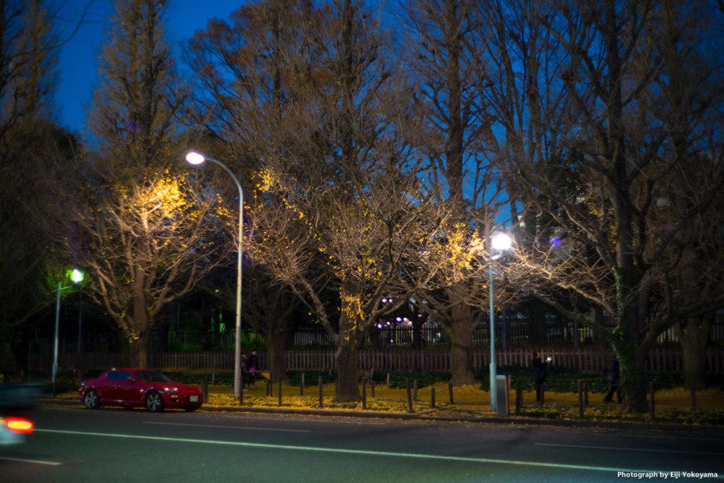 昨年12/9、宵の神宮外苑銀杏並木。