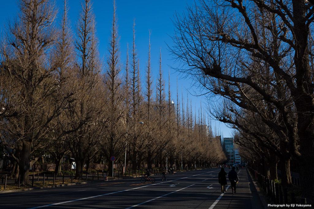 1/14撮影の、明治神宮外苑銀杏並木。