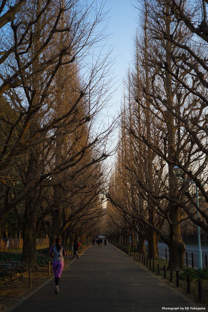 先日1/21撮影の、明治神宮外苑銀杏並木。