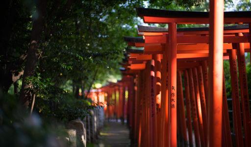 根津神社、お稲荷さんの鳥居。SONYα7II + LEICA SUMMILUX-M 50mm f/1.4 ASPH.