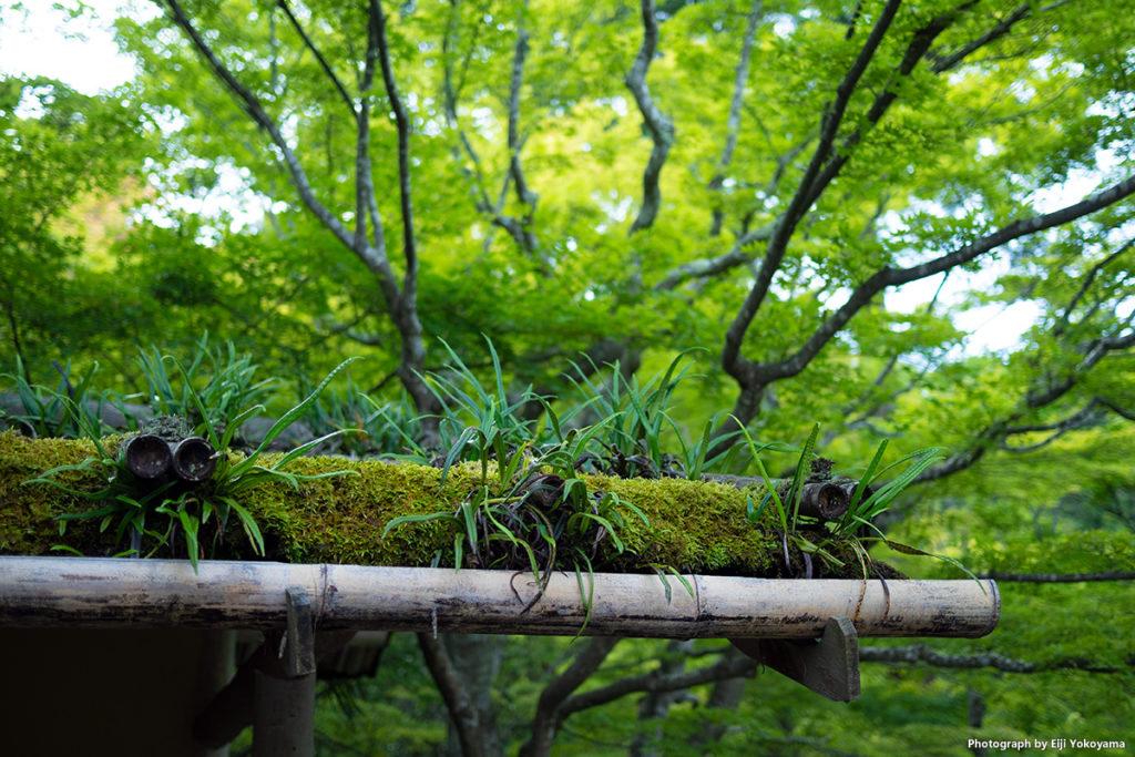 こちらも、円通院にて。新緑に苔の屋根。