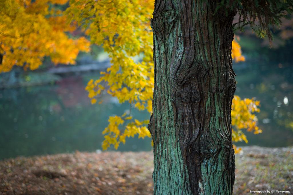 こちらは、木の幹にピントを。やはり、ピント合わせに疲れたので、、、