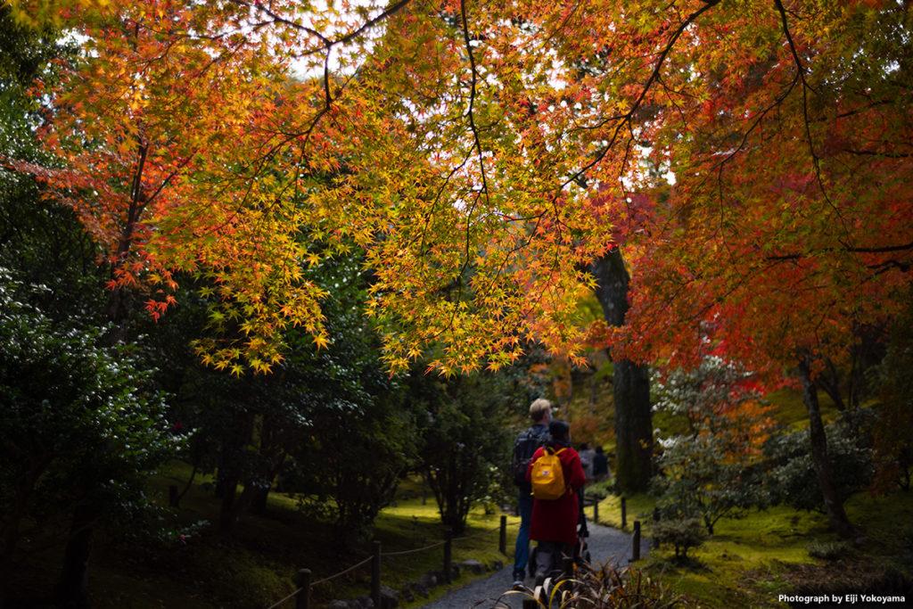 京都嵐山、天龍寺・紅葉。Leica M10 + SUMMICRON 35mm F2 7elements