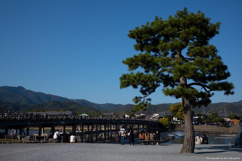 嵐山、中之島。松と渡月橋。
