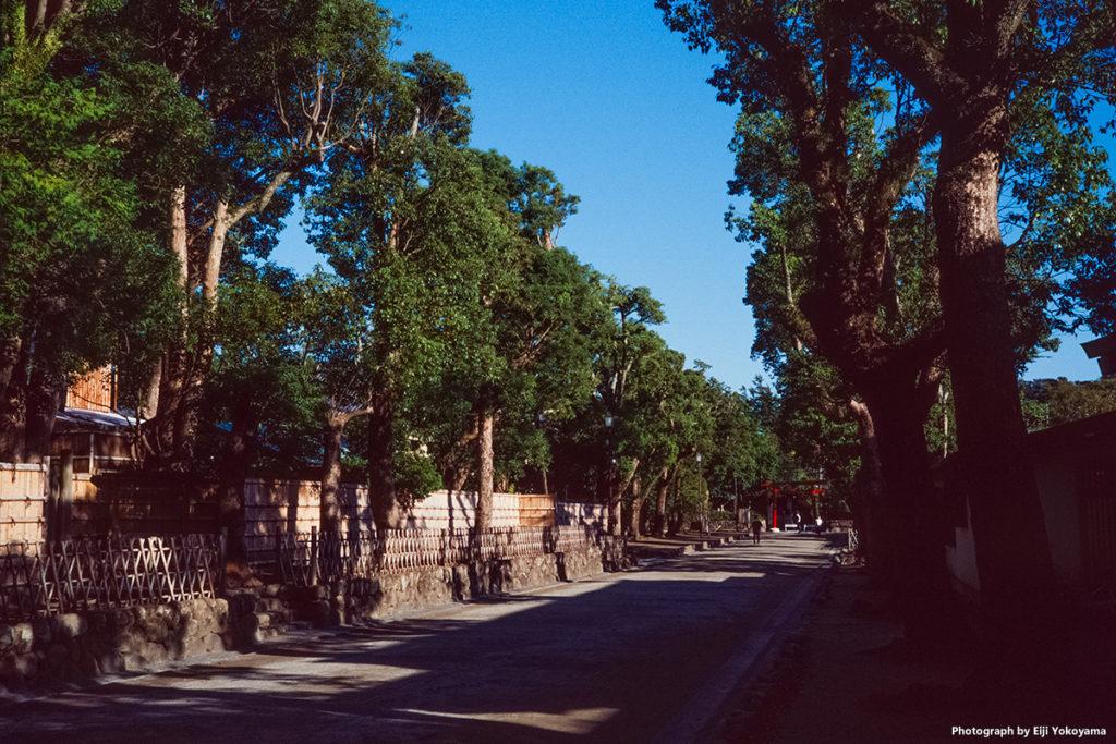 鶴岡八幡宮。