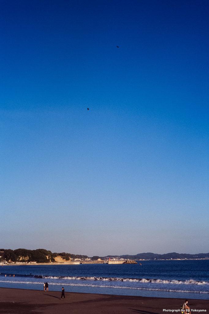 片瀬江ノ島ビーチ。トンビが2羽。
