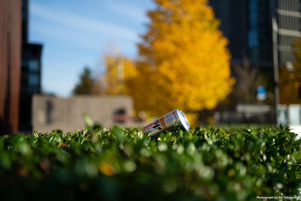 歩道脇、垣根の上にビールの空き缶が。捨てるな!、と思いながら、ついつい写真を撮ってました💦