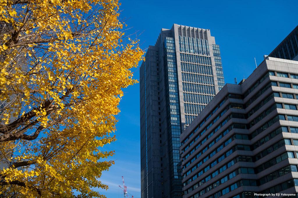 丸の内ビル街とイチョウの黄葉。