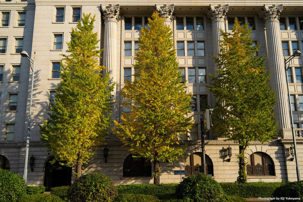明治安田生命ビルとイチョウの黄葉。ここはまだ黄葉少なく緑が多いです。