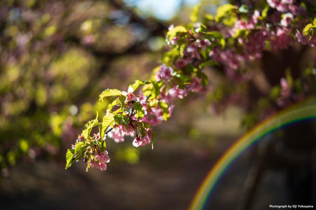 綺麗な虹が出ていたので、、、逆光で見事なゴースト💦このレンズ、フレアは少なめなんですけど。