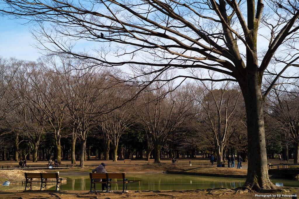 代々木公園はカラスが多いです。気をつけてないと糞攻撃を喰らいます。ベンチの人、真上の枝にカラスが!