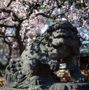 湯島天神の梅と上野公園 Leica M10 で