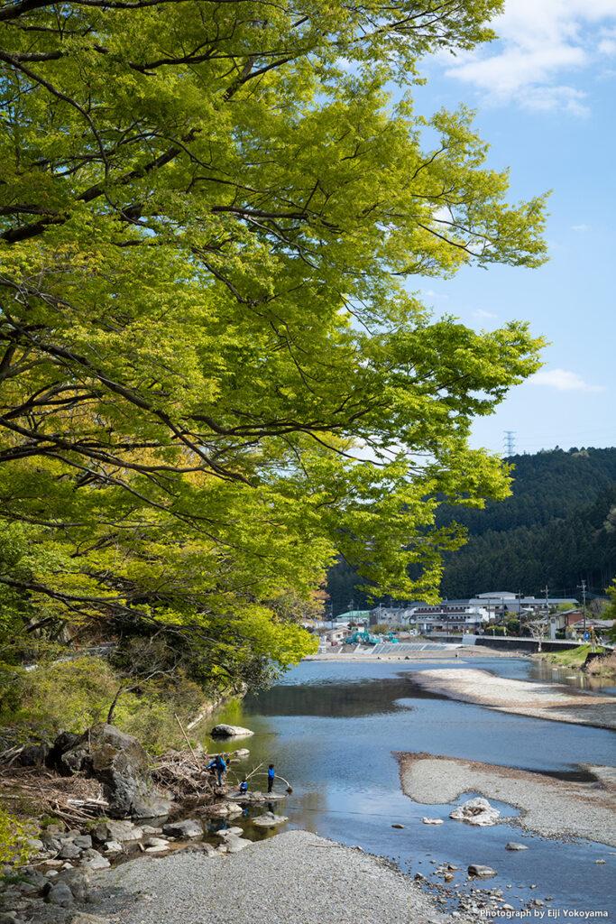秋川、新緑。