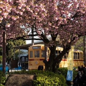 飛鳥山公園と七社神社、Leica M10-Rで桜とか