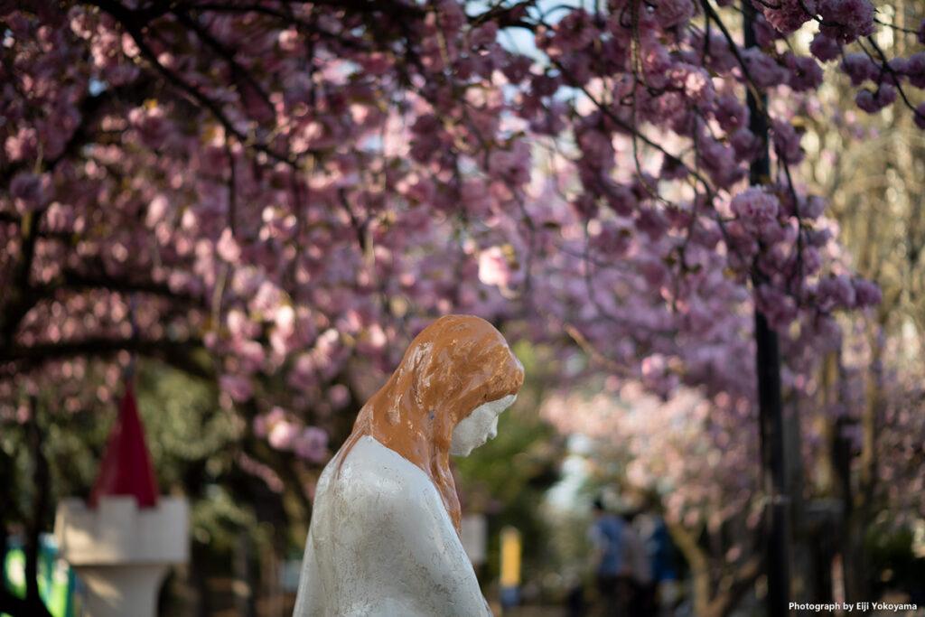 飛鳥山公園、人魚像と八重桜。