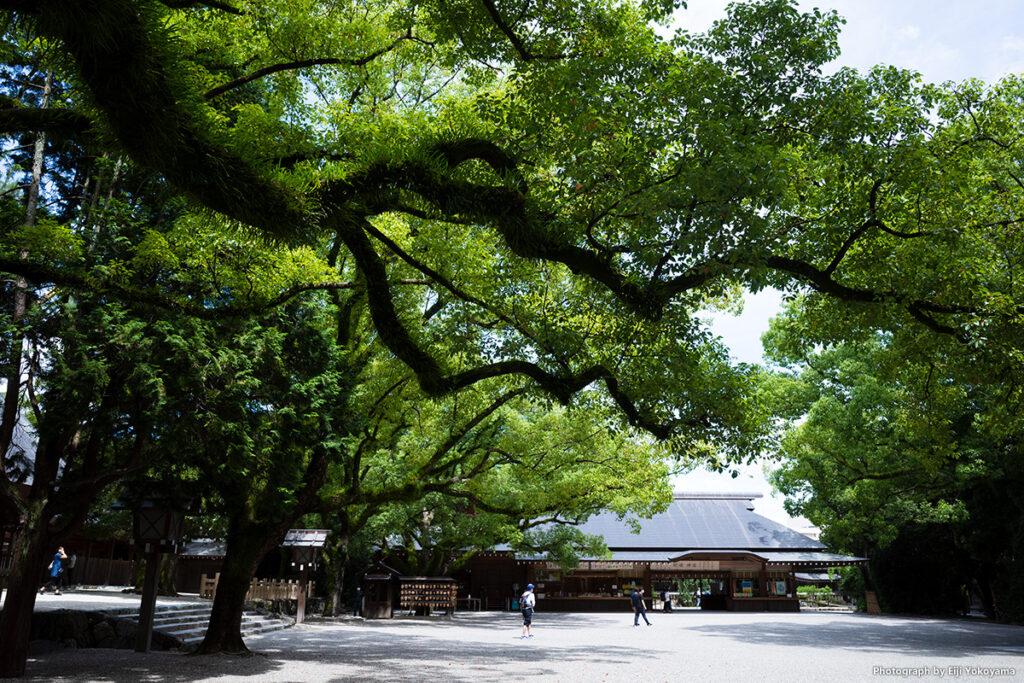 熱田神宮は枝の張り出した樹が多く、夏の陽射しから守ってくれます。